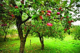 Посадка кустов и деревьев в Краснодаре