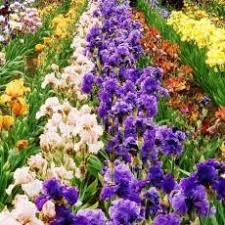 Цветники в Краснодаре