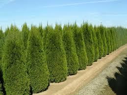 посадка деревьев в Сочи