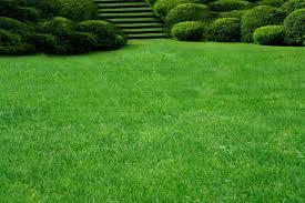 Посадка газона в Краснодаре