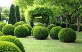 Посадка деревьев в Краснодаре
